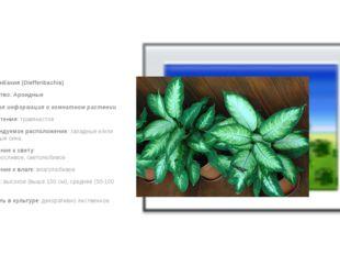 Диффенбахия (Dieffenbachia) Семейство: Ароидные Краткая информация о комнат