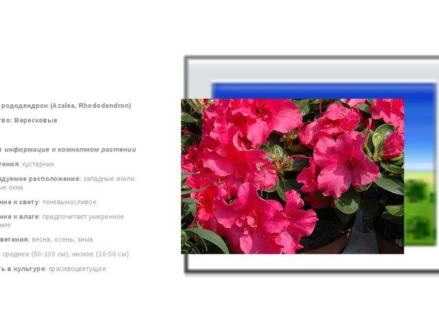 Азалия, рододендрон (Azalea, Rhododendron) Семейство: Вересковые  Краткая и...