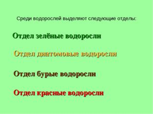 Среди водорослей выделяют следующие отделы: Отдел зелёные водоросли Отдел бур