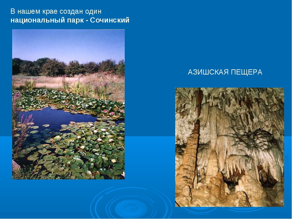 В нашем крае создан один национальный парк - Сочинский АЗИШСКАЯ ПЕЩЕРА