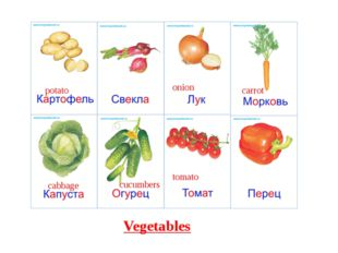 Vegetables cabbage onion carrot potato tomato cucumbers