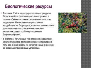 Биологические ресурсы Растения. Учёт и кадастр растительных ресурсов Округа в
