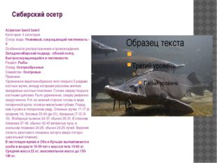 Сибирский осетр Acipenser baerii baerii Категория: II категория Статус вида: