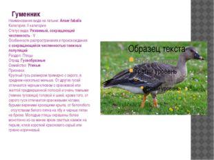 Гуменник Наименования вида на латыни: Anser fabalis Категория: II категория С