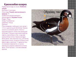 Краснозобая казарка Наименования вида на латыни: Rufibrenta ruficjllis Катего