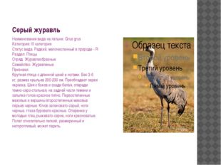 Серый журавль Наименования вида на латыни: Grus grus Категория: III категория