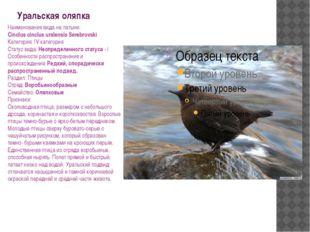 Уральская оляпка Наименования вида на латыни: Cinclus cinclus uralensis Sereb