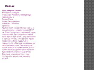 Сапсан Falco peregrinus Tunstall Категория: II категория Статус вида: Уязвимы