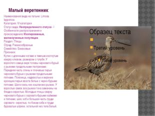 Малый веретенник Наименования вида на латыни: Limosa lapponica Категория: IV