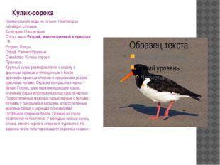 Кулик-сорока Наименования вида на латыни: Haematopus ostralegus Linnaeus Кате