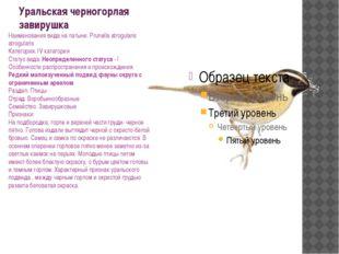 Уральская черногорлая завирушка Наименования вида на латыни: Prunella atrogul