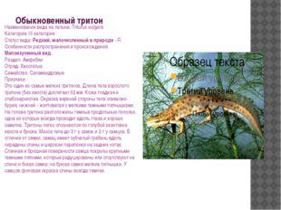 Обыкновенный тритон Наименования вида на латыни: Triturus vulgaris Категория: