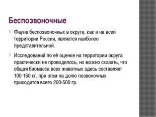 Беспозвоночные Фауна беспозвоночных в округе, как и на всей территории России