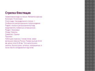 Стрелка блестящая Наименования вида на латыни: Nehalennia speciosa Категория: