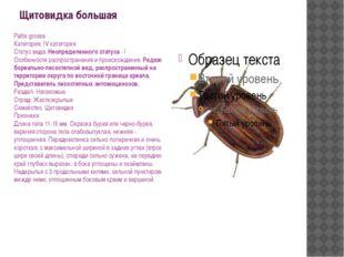 Щитовидка большая Peltis grossa Категория: IV категория Статус вида: Неопреде