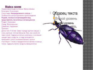 Майка синяя Наименования вида на латыни: Meloe violaceus Категория: IV катего