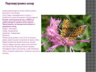Перламутровка оскар Наименования вида на латыни: Boloria oscarus Категория: I