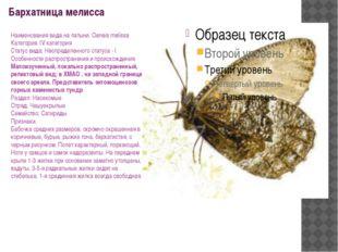 Бархатница мелисса Наименования вида на латыни: Oeneis melissa Категория: IV