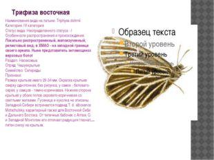 Трифиза восточная Наименования вида на латыни: Triphysa dohrnii Категория: IV