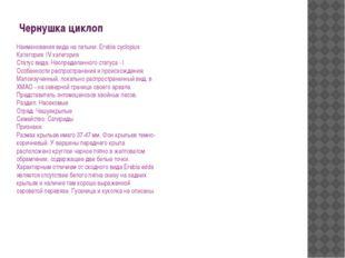 Чернушка циклоп Наименования вида на латыни: Егеbiа cyclopius Категория: IV к