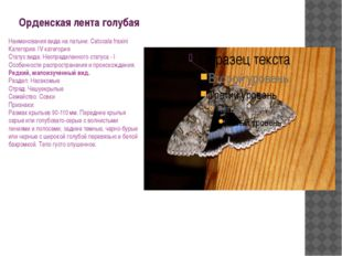 Орденская лента голубая Наименования вида на латыни: Catocala fraxini Категор