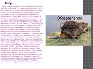 Бобр — крупный грызун, приспособленный к полуводному образу жизни. Длина его