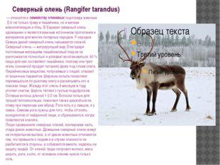 Северный олень (Rangifer tarandus) — относится к семейству оленевых подотряд