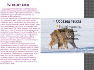 Ры́си (лат. Lynx) — род хищных млекопитающих семейства кошачьих, наиболее бл
