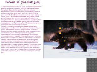 Росома́ха (лат. Gulo gulo) — хищное млекопитающее семейства куньих, единств