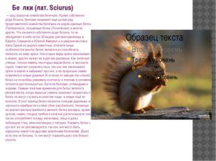 Бе́лки (лат. Sciurus) — род грызунов семейства беличьих. Кроме собственно ро