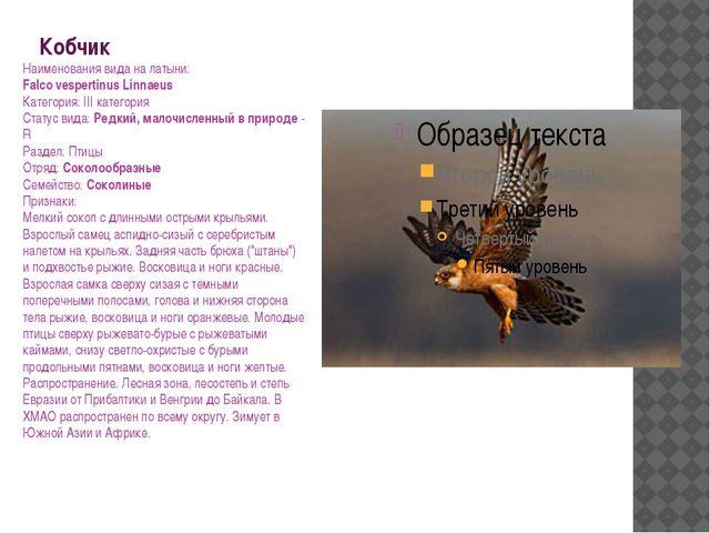 Кобчик Наименования вида на латыни: Falco vespertinus Linnaeus Категория: III...