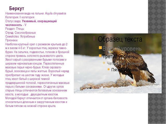 Беркут Наименования вида на латыни: Aquila chrysaetos Категория: II категория...