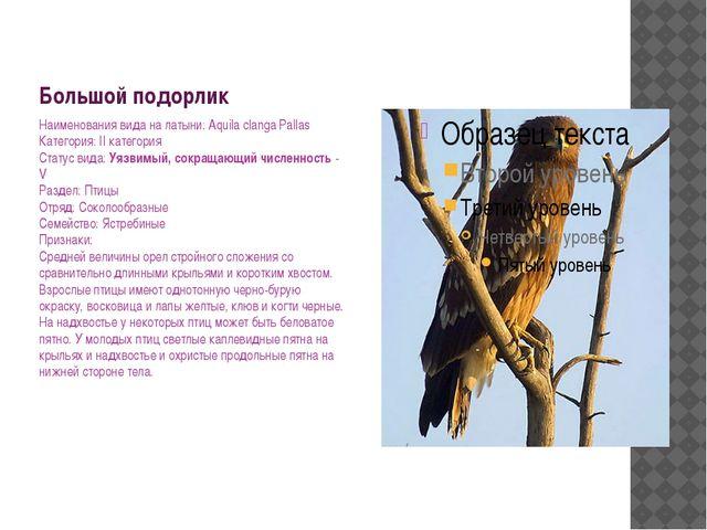 Большой подорлик Наименования вида на латыни: Aquila clanga Pallas Категория:...