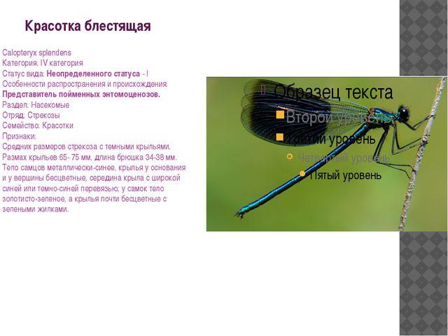 Красотка блестящая Calopteryx splendens Категория: IV категория Статус вида:...
