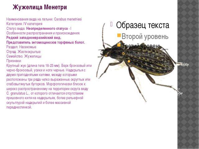 Жужелица Менетри Наименования вида на латыни: Carabus menetriesi Категория: I...