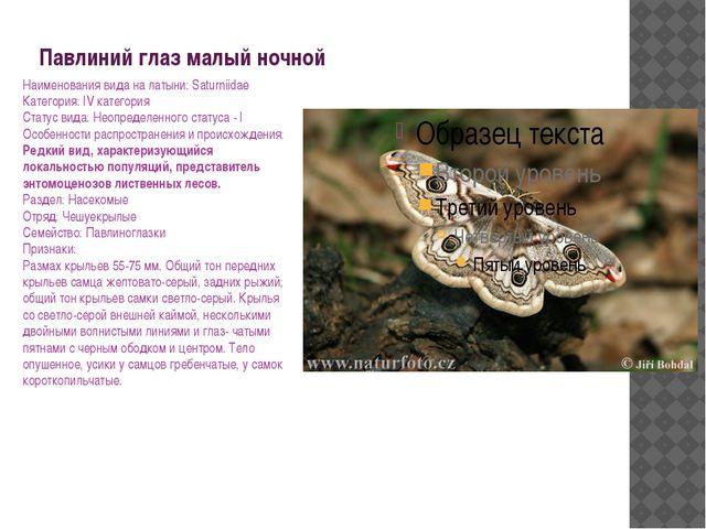 Павлиний глаз малый ночной Наименования вида на латыни: Saturniidae Категория...