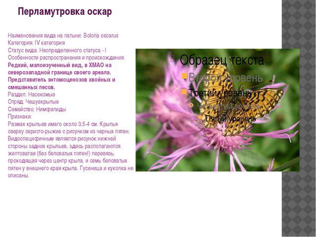 Перламутровка оскар Наименования вида на латыни: Boloria oscarus Категория: I...
