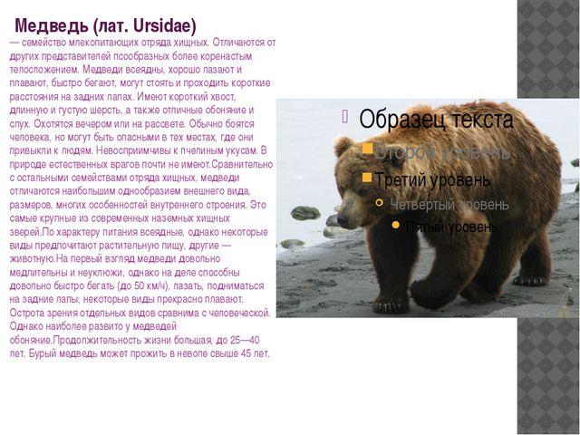 Медведь (лат. Ursidae) — семейство млекопитающих отряда хищных. Отличаются о...