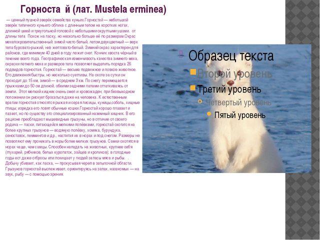 Горноста́й (лат. Mustela erminea) — ценный пушной зверёк семейства куньих.Го...