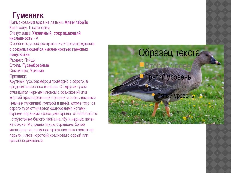 Гуменник Наименования вида на латыни: Anser fabalis Категория: II категория С...
