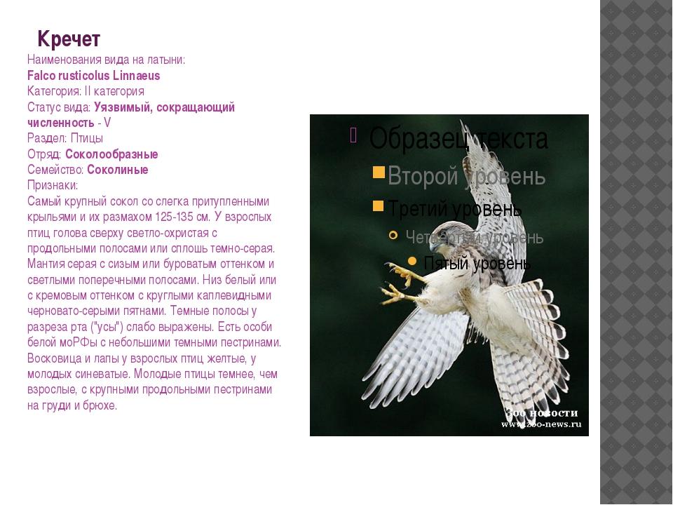Кречет Наименования вида на латыни: Falco rusticolus Linnaeus Категория: II к...