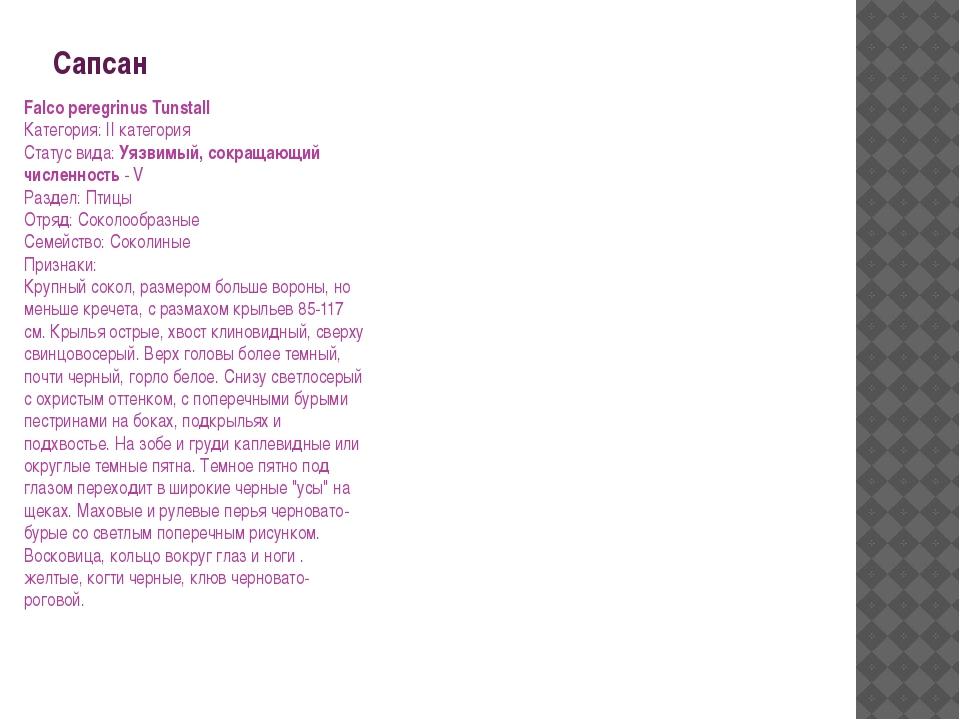 Сапсан Falco peregrinus Tunstall Категория: II категория Статус вида: Уязвимы...