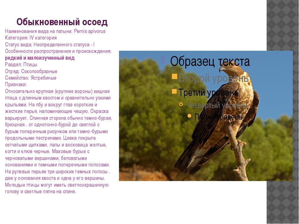 Обыкновенный осоед Наименования вида на латыни: Pernis apivorus Категория: IV...