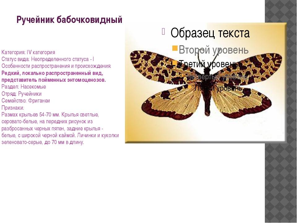 Ручейник бабочковидный Категория: IV категория Статус вида: Неопределенного с...