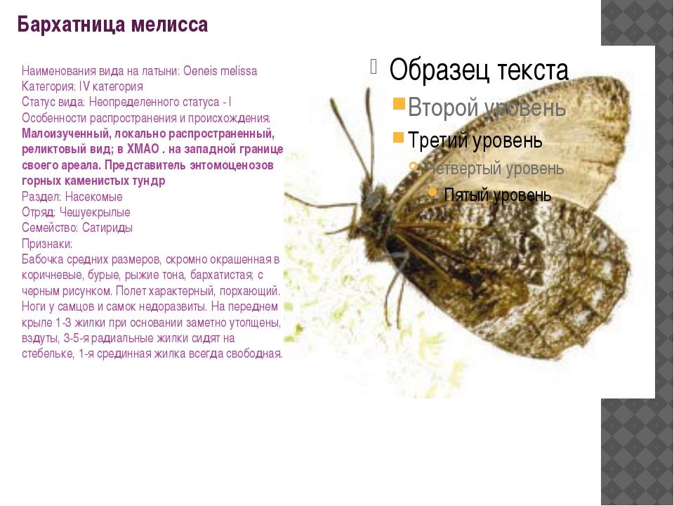 Бархатница мелисса Наименования вида на латыни: Oeneis melissa Категория: IV...