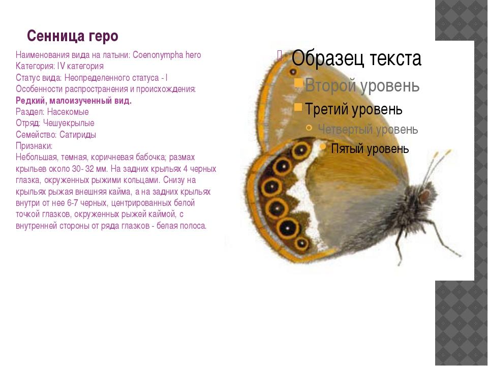 Сенница геро Наименования вида на латыни: Coenonympha hero Категория: IV кате...