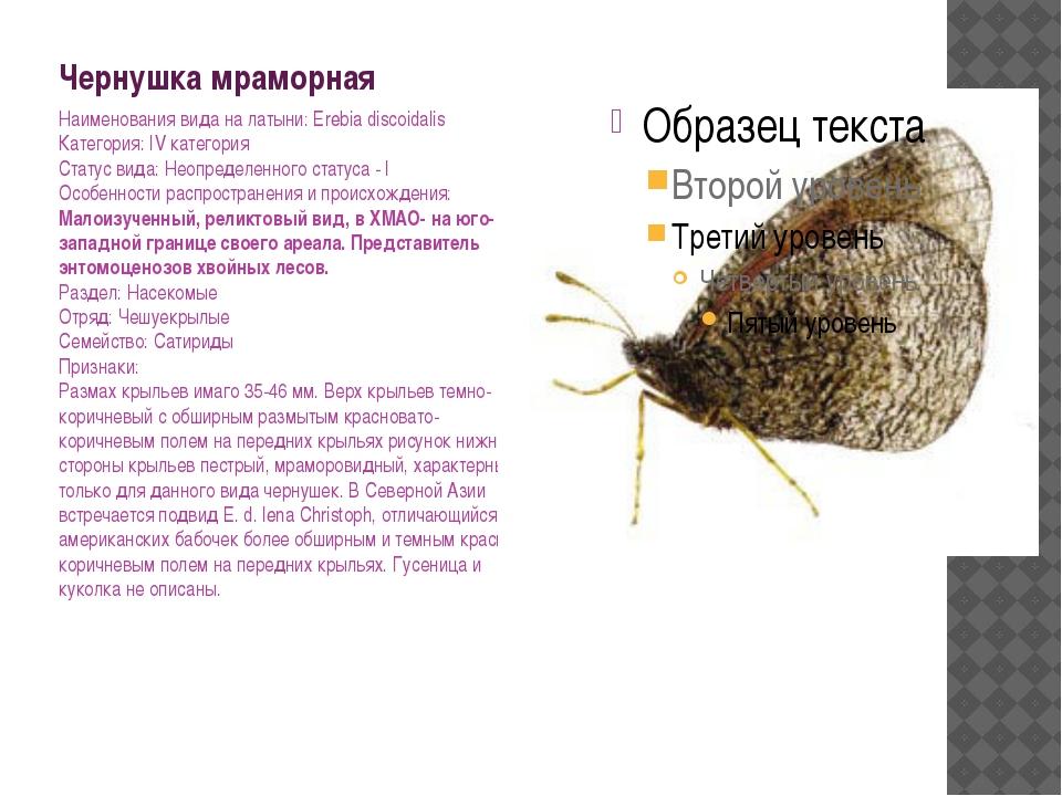 Чернушка мраморная Наименования вида на латыни: Erebia discoidalis Категория:...