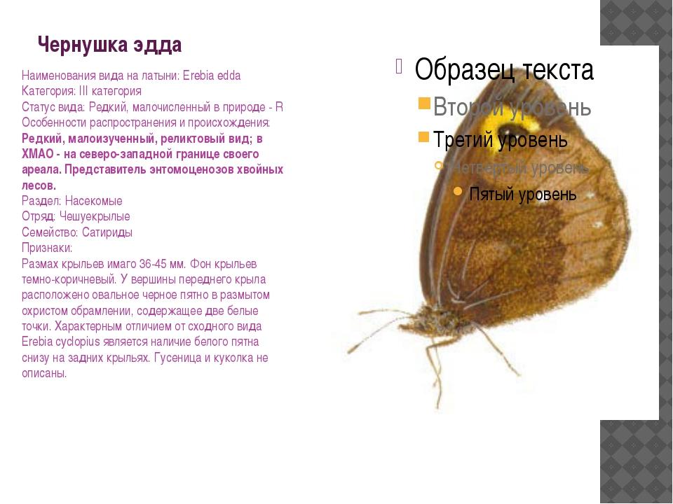 Чернушка эдда Наименования вида на латыни: Erebia edda Категория: III категор...