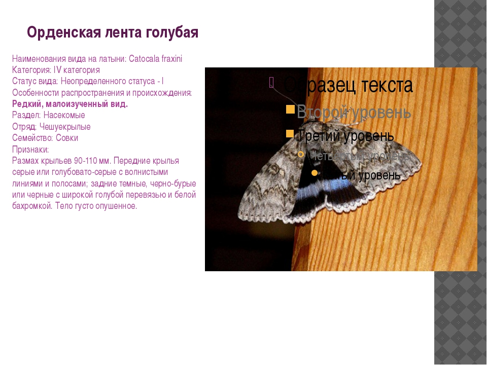 Орденская лента голубая Наименования вида на латыни: Catocala fraxini Категор...