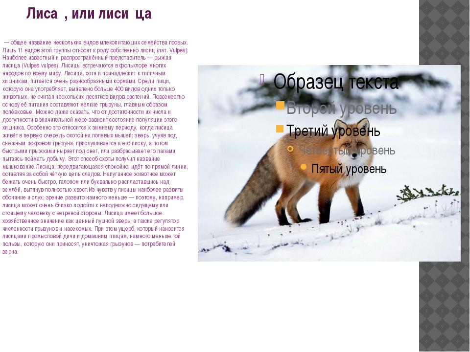 Лиса́, или лиси́ца — общее название нескольких видов млекопитающих семейства...